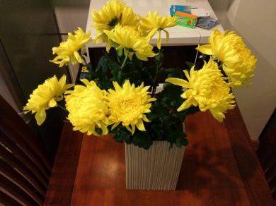 Hoa Cúc Vàng, Yellow Chrysanthemums