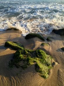 Poipu Beach Green Rock